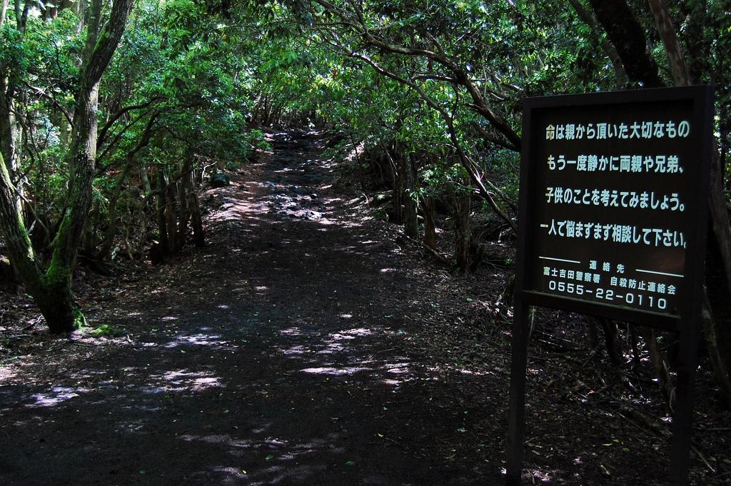 Image result for suicide forest japan